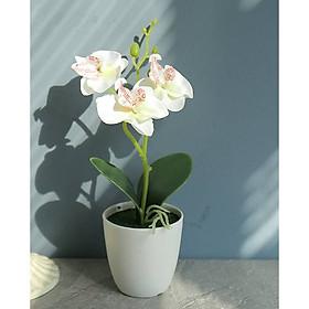 Chậu cây hoa giả hoa lan hồ điệp