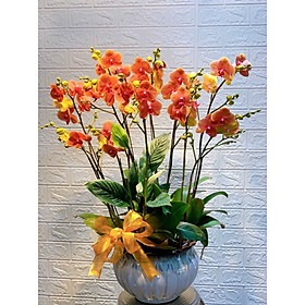 Chậu hoa Lan Hồ Điệp Đà Lạt - Mẫu 06 - Đường kính chậu 20 x cao 50 cm - Mầu Đỏ Vàng - Chậu hoa, cây cảnh tặng khai trương, tân gia