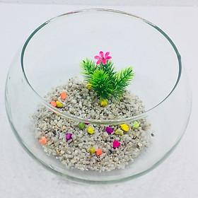 Bể cá mini để bàn tròn T11 Tặng phụ kiện