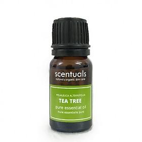Tinh dầu tràm trà - Pure essential oil 10 ml - TEA TREE