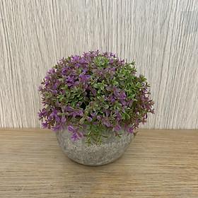 Chậu cỏ giả bonsai mini trang trí - Để bàn