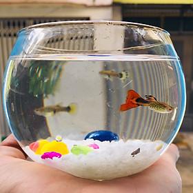 Chậu thủy tinh mini , bể cá mini tròn 10cm