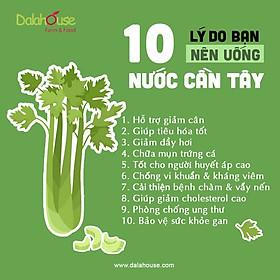 Bột cần tây nguyên chất sấy lạnh Dalahouse 150g - Hỗ trợ giảm cân - Detox thanh lọc cơ thể