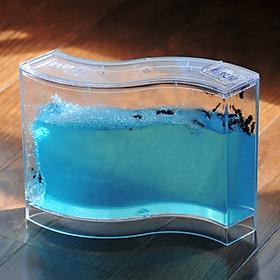 Bể Nuôi Kiến Khoa Học 4D