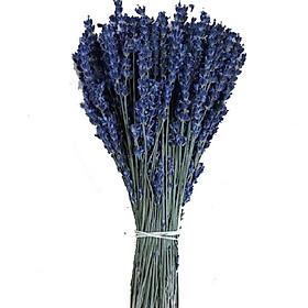 Bó Hoa Lavender Nhập Khẩu Pháp 300 Cành