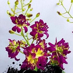 Cây lan Dendro hoa hồng thân tơ sắp hoa