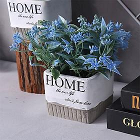 Chậu cây - hoa để bàn trang trí Home