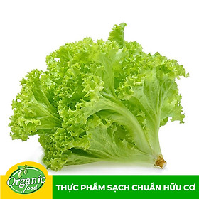 Xà lách Lô Lô xanh hữu cơ Organicfood - 250g