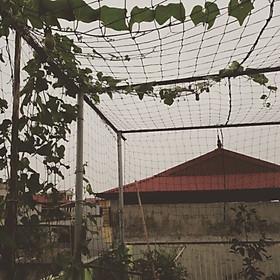 Lưới Trồng Cây, Lưới Giàn Leo Cho Cây 3m x 5m