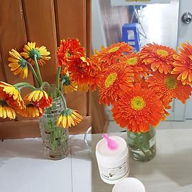 Thuốc cắm hoa lâu tàn Longlife SG nhập khẩu Israel (dạng bột Hủ 1 KG pha 100 L nước) giúp hoa cắm xốp tại Shop Hoa Florist tươi gấp 2 lần và hạn chế thay hoa định kỳ