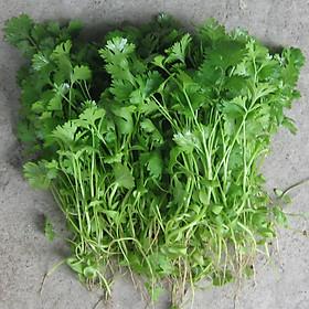 Hạt giống Rau mùi ( ngò) F1 - Nảy mầm cao Titapha