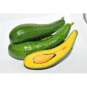Bơ 034 Đặc Sản Đà Lạt - Laman Food - Loại Trái Dài Từ 3-5 Trái/ Kg