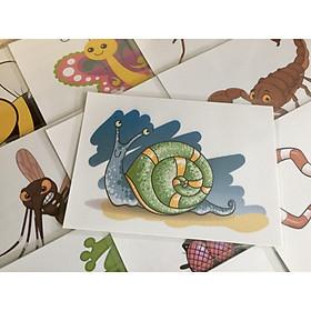 Animal Flashcards: Insect and Reptile - Thẻ học tiếng Anh chủ đề Động vật: Côn trùng và bò sát - 20 cards