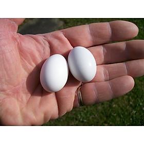Combo 30 trứng nước cho chim bồ câu
