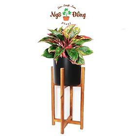 Đôn Kê Chậu Cây Cảnh Chậu Hoa 2 Tầng Bằng Gỗ Tràm Bông Vàng Trang Trí Trong Nhà Ngoài Vườn Chân Vuông C65cm
