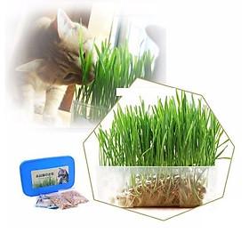 Bộ trồng cỏ mèo