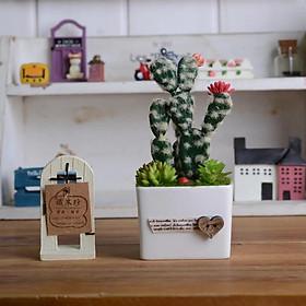 Tiểu Cảnh Cây hoa giả Mini Xương Rồng tai thỏ MS 1335