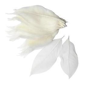 100 Pieces Natural Magnolia Skeleton Leaf Leaves Scrapbooking