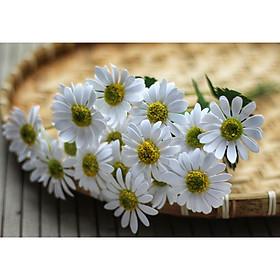 Hoa Cúc Họa Mi Giấy Mỹ Thuật Handmade Bộ 20 Bông Làm Sẵn Đẹp Tỉ Mỉ
