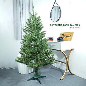 Cây thông Noel cao 1m5 trang trí cực đẹp tặng dây sao đầu cành và 3 dây kim tuyến