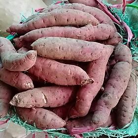 [Chỉ giao HN] Khoai lang mật - 1kg