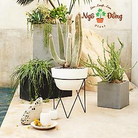 Đôn Kê Nâng Đỡ Chậu Cây Hoa Cảnh Bằng Sắt Tĩnh Điện Màu Đen C40cm Trang Trí Trong Nhà Ngoài Vườn