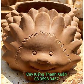 Chậu đất nung trồng cây - Chậu trồng cây sen đá, xương rồng Hình Nhím (Cỡ trung) có lỗ thoát nước