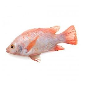 [Chỉ Giao HN] - Cá Diêu Hồng -1kg