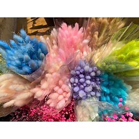 Loại đẹp 30 bông hoa khô CỎ ĐUÔI THỎ Lagurus Bunny Tails nhiều màu decor trang trí nhà cửa, đạo cụ chụp ảnh