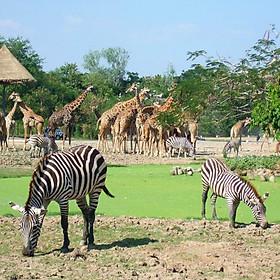 Hình đại diện sản phẩm Vé Safari World Bangkok - Single Day Pass (Sở Thú Safari & Khu Marine World & Show Thú) + Buffet Trưa