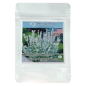 Hình đại diện sản phẩm Hạt Giống Lavender - Snow - Lavandula Angustifolia (5 Hạt)