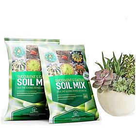 Bộ 2 Đất  SOIL MIX- Trồng sen đá, xương rồng-Giúp kích thích ra rễ, giữ các chất dinh dưỡng cho cây-(6KG/1 gói)