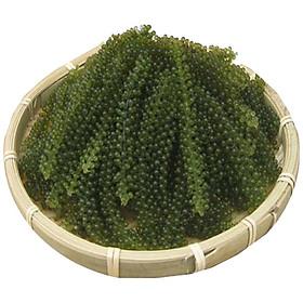 Lô 5 gói  RONG NHO Tách Nước Trí Tín (đặc sản Nha Trang) (20gr x 5 gói)