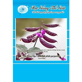 10h Hạt Giống Đậu Ván Tím (Lablab purpureus)