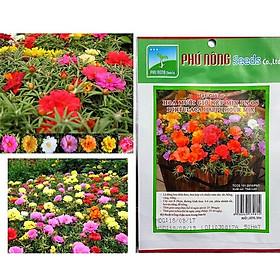 Hạt giống hoa mười giờ kép mix PN 08 Phú Nông - Gói 50 hạt
