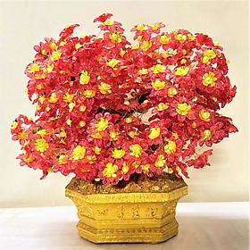Cây Hoa Đỏ Trang Trí Nhà Cửa