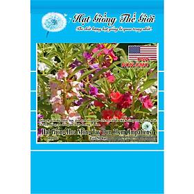 50h Hạt Giống Hoa Móng Tay Lùn - 30cm Mix (Impatiens Balsamina)