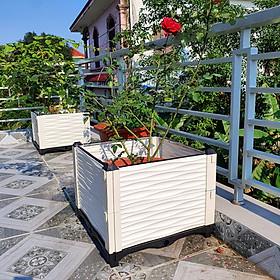 KHAY (CHẬU) GHÉP THÔNG MINH: Kích thước theo nhu cầu - Phù hợp trồng mọi loại cây: rau sạch, hoa , cây cảnh...- Sang trọng - Hiệu quả - Độ bền cao - Nhựa PP an toàn. - 39 Cm - 50 x 50 cm
