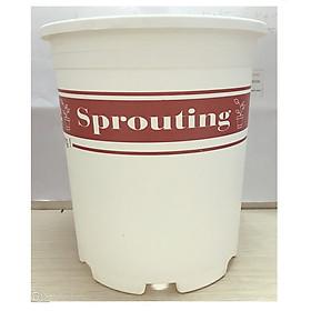 1 Chậu Nhựa Trắng Size 3 (3Gal) Sprouting -Gieo Mầm Cuộc Sống