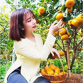 Tour du lịch vườn quýt hồng Lai Vung – Thưởn thức đặc sản trứ danh Quýt Hồng