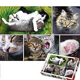 Tranh ghép hình TREFL 26145 - 1500 mảnh Chuyện của Mèo (jigsaw puzzle Tranh ghép hình chính hãng)