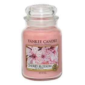 Nến hũ L Cherry Blossom