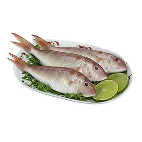 [Chỉ Giao HCM] - Cá Đổng Phú Quốc, Hải Sản Biển Tự Nhiên Túi 500Gr - Foodmap