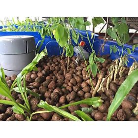 1Kg Sỏi trồng thủy canh, sỏi nhẹ, viên đất nung trồng cây