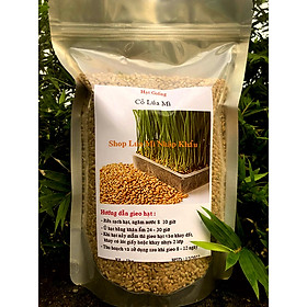 Hạt giống Cỏ Lúa Mì Úc (1000 gr)