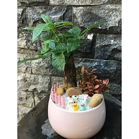 Cây Kim Ngân Lá Đỏ chậu hồng cute