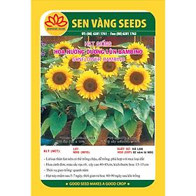 Hạt giống hoa Hướng Dương Lùn BamBino Hà Lan VTS105