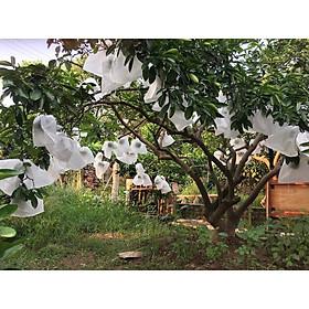 Túi bao trái cây kích thước 18x18cm (bịch 100 cái) bằng vải không dệt giúp bảo vệ bề mặt trái tránh côn trùng, nám vỏ do nắng gắt...