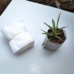 Túi bầu ươm cây tự tiêu - 1000 túi