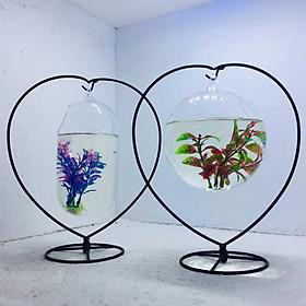 Bể cá mini để bàn combo Treo hình trái tim